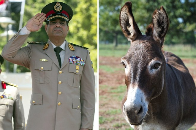 Man Jailed for Naming Donkey After Military Chief Abdel Fattah al-Sisi