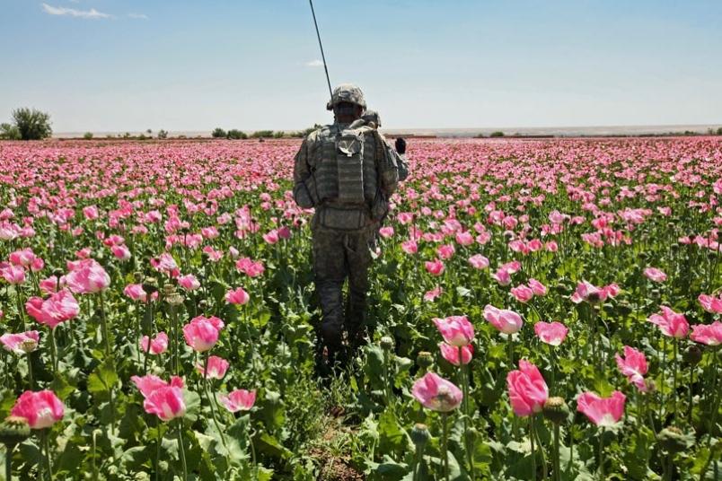 afghanistan-10-25-10-marijuana-field