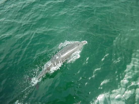 Image of a dolphin (snagged from the web, probably not the one i saw)